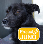 Pedigree® Project Juno See What Good Food Can Do Logo